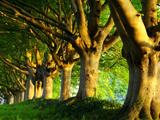 منظره درختان سرسبز در تابستان