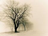 عکس درخت خشکیده