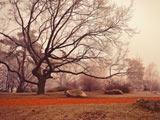 عکس منظره زیبا درخت خشکیده