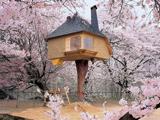 عکس خانه درختی زیبا
