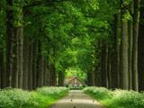منظره جاده درختی سرسبز