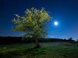 تک درخت زیبا در شب