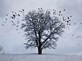 عکس تک درخت در برف زمستان