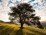 منظره تک درخت زیبا در طبیعت