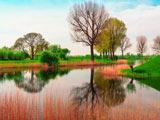 منظره زیبای رودخانه سبز