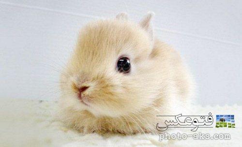 عکس بچه خرگوش بامزه و ریزه میزه
