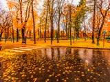 پارک جنگلی بارانی پاییزی پاریس