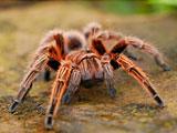 پوستر عنکبوتهای بزرگ
