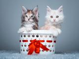 بچه گربه ها داخل سبد