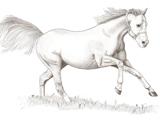 طراحی سیاه قلم اسب