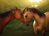 عکس رمانتیک اسب ها