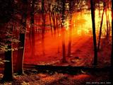تابش نور قرمز در جنگل