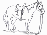 طرح نقاشی بی رنگ اسب